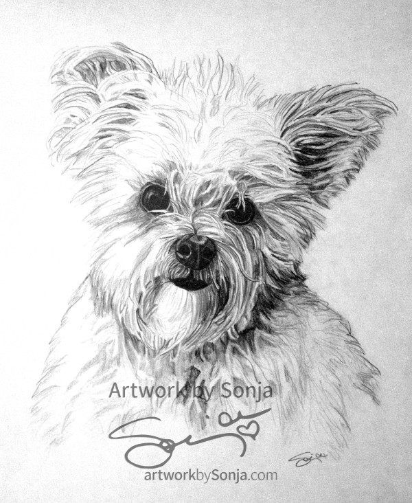 Jake the Fuzzy Dog Pet Portrait by Sonja Petersen