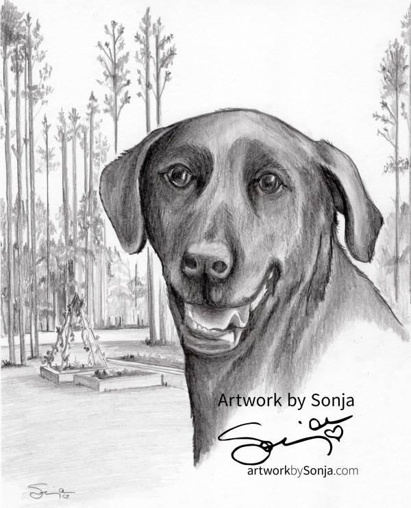 Black Labrador Retriever Memorial Drawing by Sonja Petersen