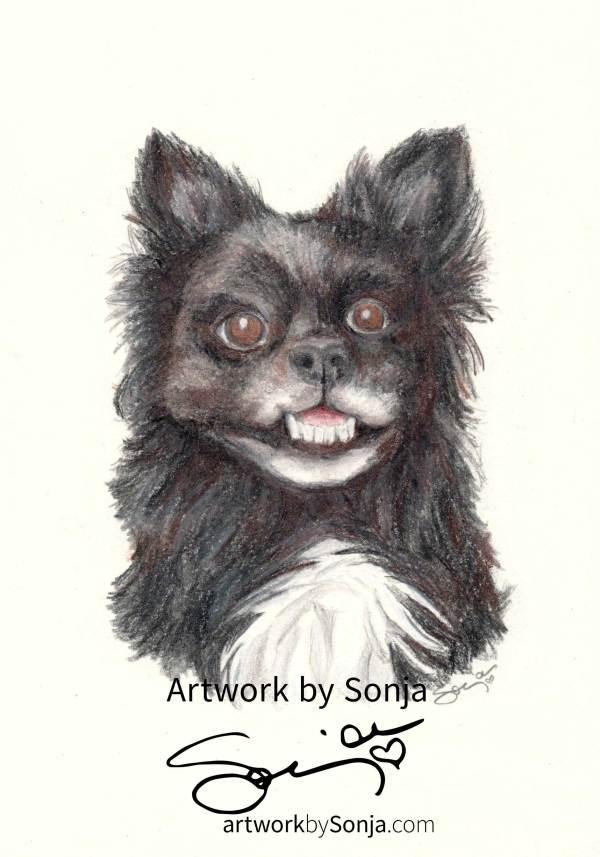 Memorial Pet Portrait by Sonja Petersen