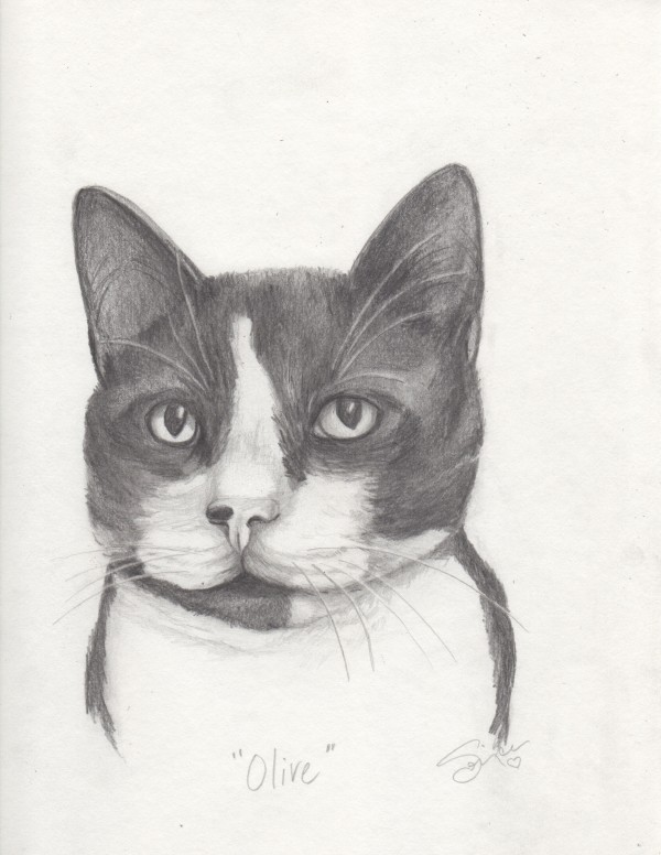 Olive Cat Portrait by Sonja Petersen