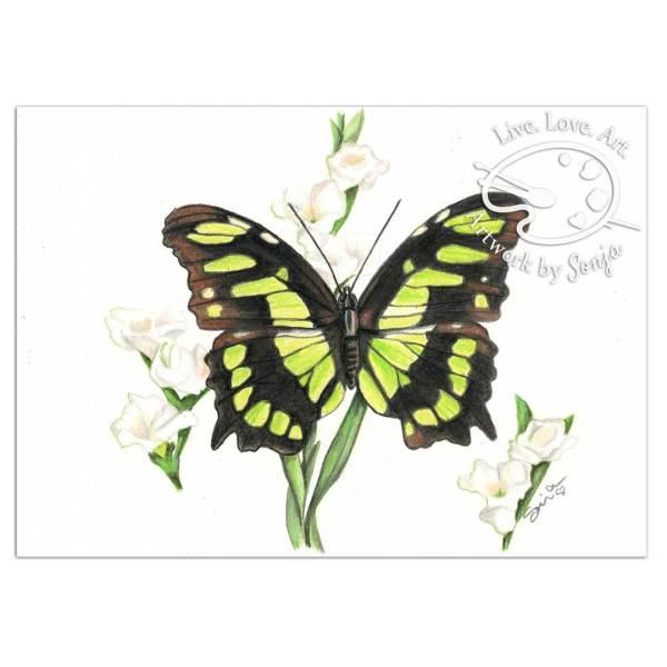 Peridot Malachite Butterfly Drawing by Sonja Petersen