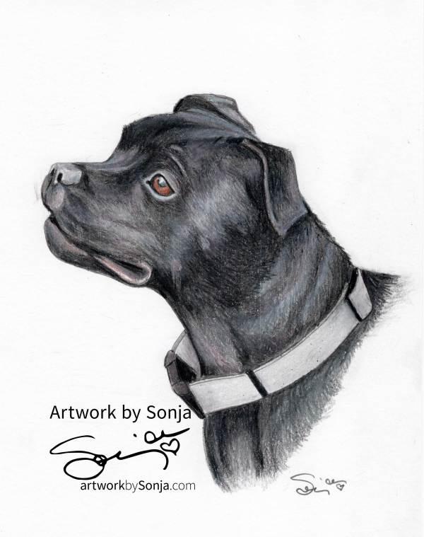 Pitbull Pet Portrait by Sonja by Sonja Petersen