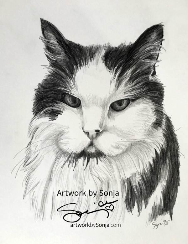 Fuzzy Kat Portrait by Sonja Petersen