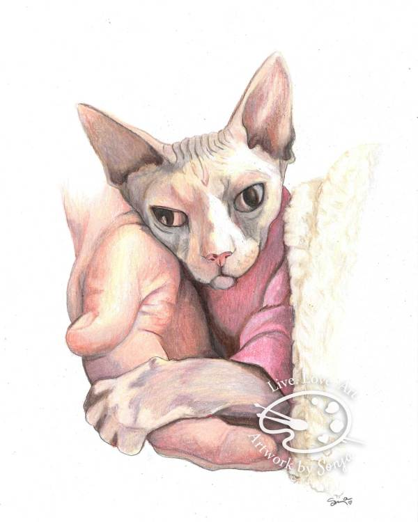 Sphynx Cat Portrait by Sonja Petersen