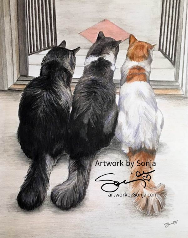 Three Cats Portrait Drawing by Sonja Petersen