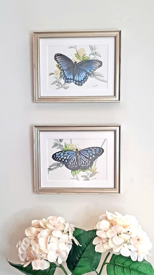 Pair of Butterflies by Sonja Petersen