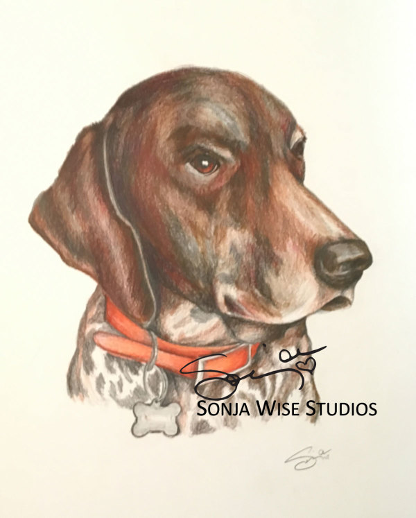 Brown and White Pet Portrait by Sonja Petersen