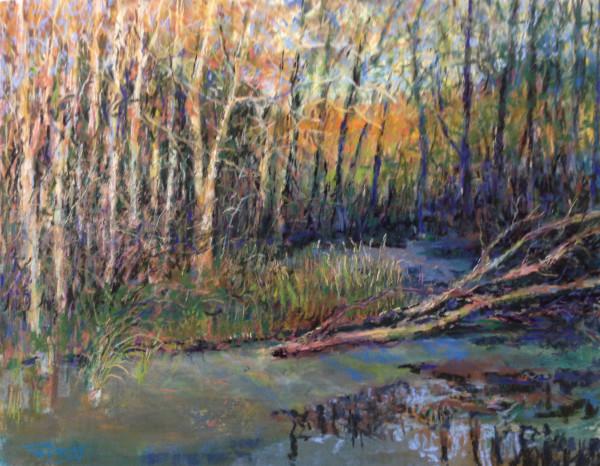 Wetlands by Tom Bailey