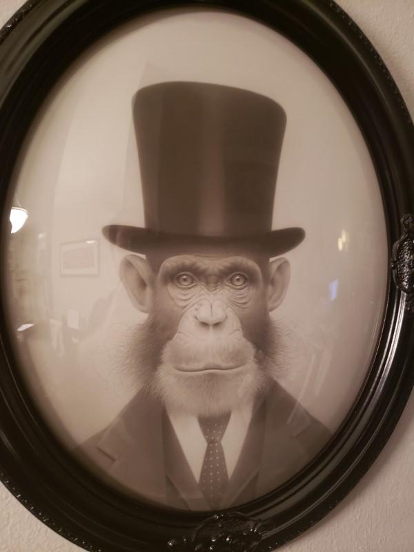 Upper-crust Chimpanzee by Travis Louie