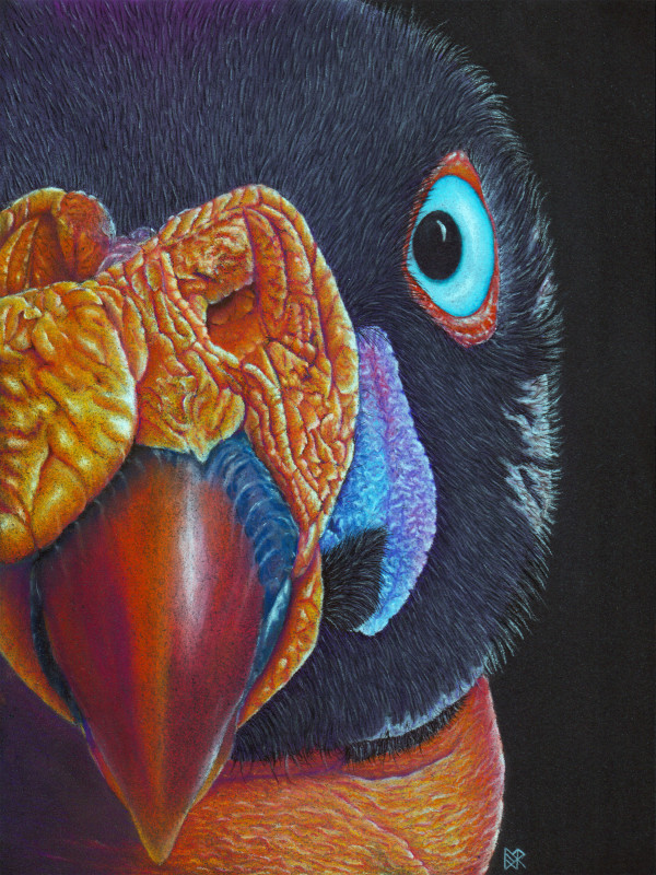 PatternEyes Series - King Vulture by Lori Corbett