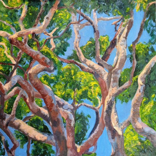 Angophora by Kit Hoisington
