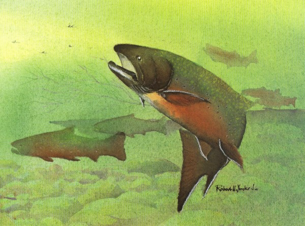 Brook Trout by Robert Yonke