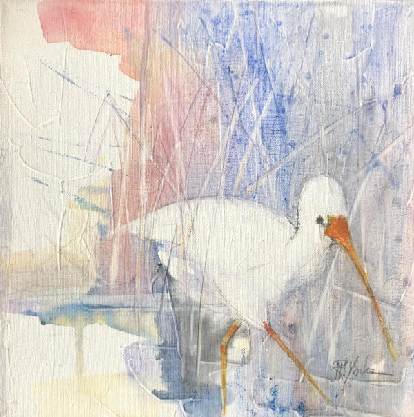 Ibis by Robert Yonke