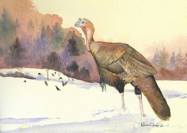 Lone Gobbler by Robert Yonke