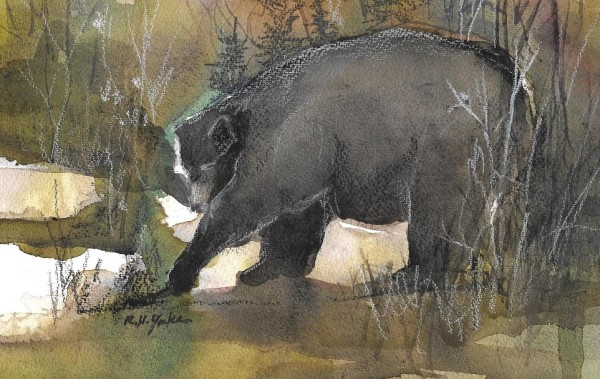 Ursus Americanus by Robert Yonke