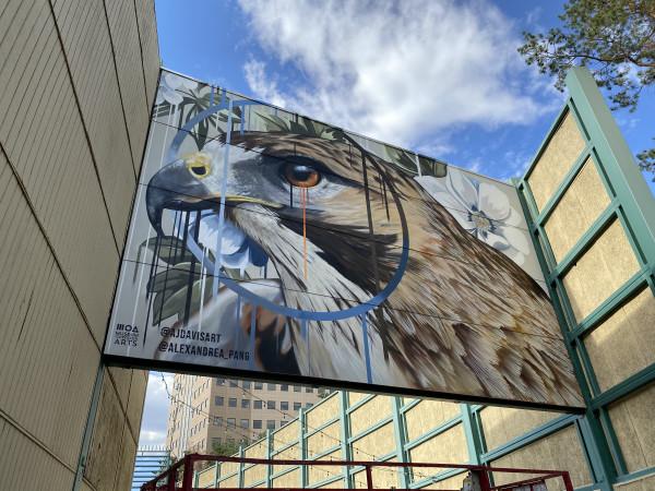 Hawk Mural by AJ Davis