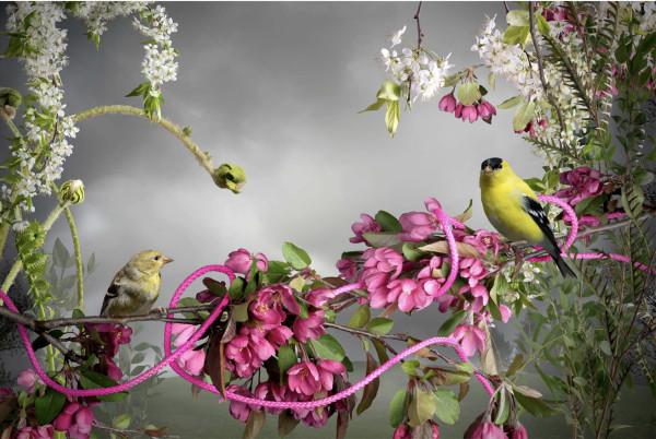 Goldfinch-Pink Cord by Jason DeMarte
