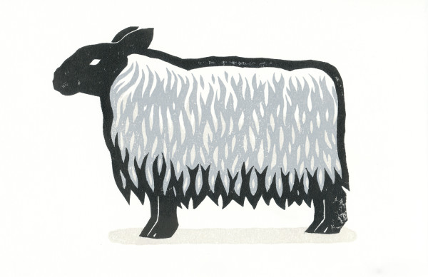 Sheep by Jenn Rodriguez