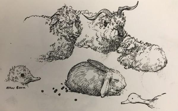 Animals by Shiqing Deng