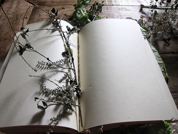 Book of smells.2177 from the series Book of smells | Livro dos cheiros.2177 da série Livro dos cheiros by Josely Carvalho