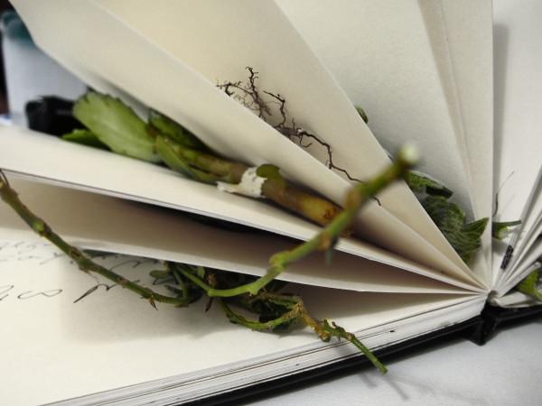 Book of smells.1936 from the series Book of smells | Livro dos cheiros.1936 da série Livro dos cheiros by Josely Carvalho