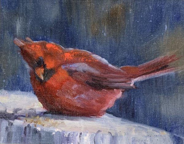 Cardinal in Snow by Liz Shepherd