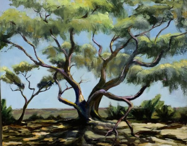 Live Oak by Liz Shepherd