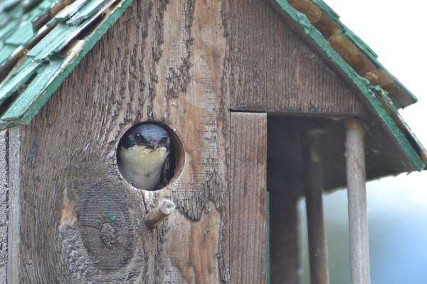 Peek-a-Boo by Elizabeth Lancour