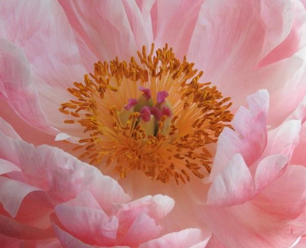 Inner Beauty by Mei-Ying Jue, RN