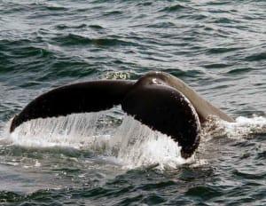 Whale Tale - Gordon Tempest