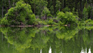 Columbia Valley Wetlands 2