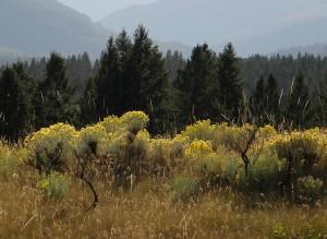 My Meadow II - 2009