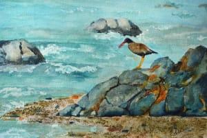 Channel Island Shore Bird