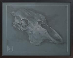 Skull Study #1