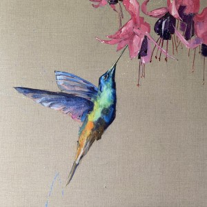 Hummingbird and the fuscia