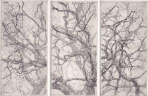 separation oak II