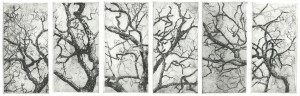 separation oak