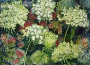 Queen Ann's Lace Study III