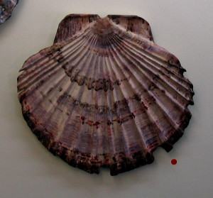Shell - carved sculpture . 012
