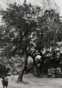 Canyon Near Monterrey, Mexico, April 1967