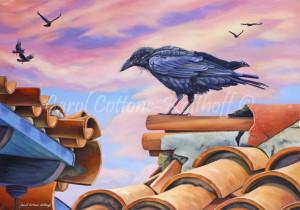 Catalina Raven
