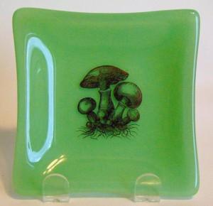 Mushroom Dish on Mint Green