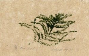 Pine Frond 1, 6-6,