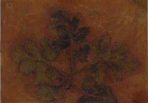 Scented Pelargonium 3, Plate