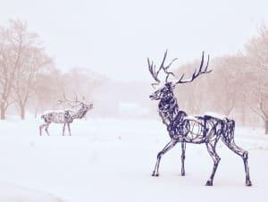 Farmingdale Elk, Tall Elk, Roaming Elk