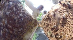 Bee Hive Dive