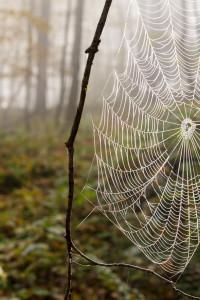 Spider web in morning Fog