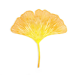 Ginkgo biloba leaf study #2