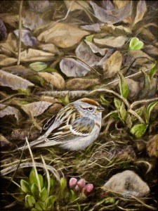 Little Treasure- Chipping Sparrow