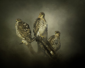 "2nd Place - Nicole Wilde - ""The Lookouts"" - www.photomagicalart.com"